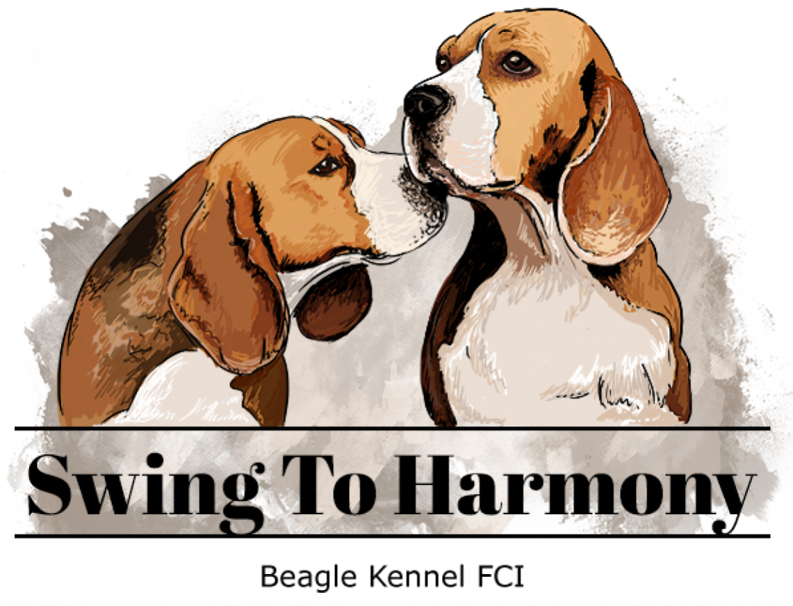 Swing To Harmony Beagles